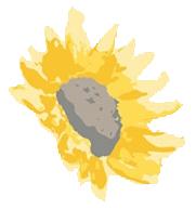 sunflower up